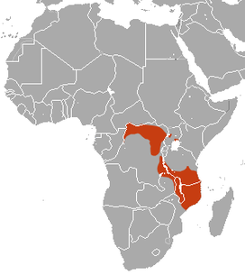 Checkered Elephant Shrew area.png