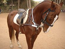 how to put draw reins on