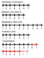 Chromosomenmutation.png