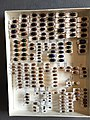 Chrysomelidae collection, Natural History Museum, London 109.jpg