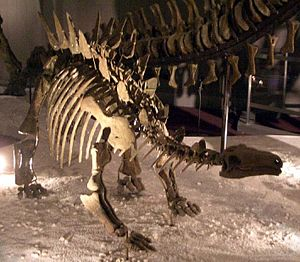 Oxfordian (stage) - Chungkingosaurus