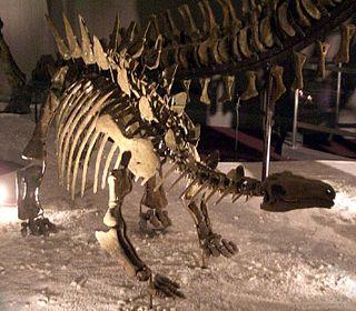 <i>Chungkingosaurus</i>