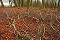 Clearance in Rag Wood - geograph.org.uk - 1067415.jpg