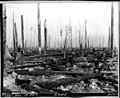 Cleared land in Cedar River Watershed, 1911 (38955058432).jpg