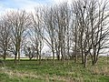 Clump of trees near Forest Hill - geograph.org.uk - 1780688.jpg