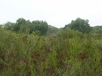 Coastal sage scrub - Coastal sage scrub on the Santa Rosa Plateau, with oak woodland in background.
