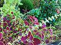 Colourfull leave plants.jpg
