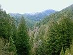Conifer forest edit.jpg