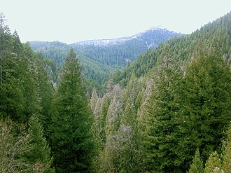 Sierra County, California - Image: Conifer forest edit