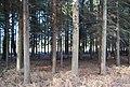 Conifers, Hartley Wood - geograph.org.uk - 1207152.jpg