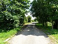Country Lane - geograph.org.uk - 836531.jpg