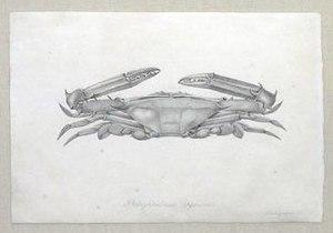 Christophe-Paulin de La Poix de Fréminville - Image: Crab fremenville