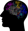 Cranium colored mind.png