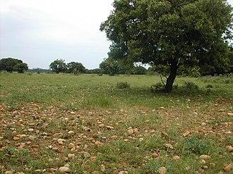 Crau - Crau stony plain