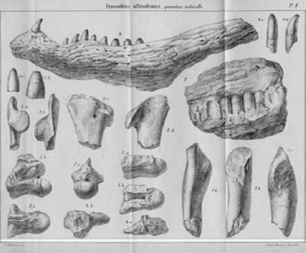 Massaliasuchus