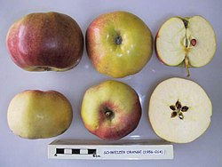 Cross section of Schweizer Orange, National Fruit Collection (acc. 1956-014).jpg