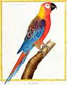 Cuban Macaw.jpg