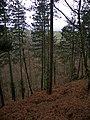 Cwm Wyre - geograph.org.uk - 705688.jpg