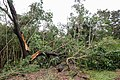 Cyclone Marcus in Darwin – Snapped tree in Stuart Park 03.jpg