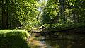 D08 Tiefental Königsbrück Naturschutzgebiet (5).jpg
