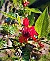 Dahlia Flowers (13).jpg