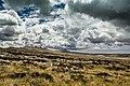 Darwin Rd, FIQQ 1ZZ, Falkland Islands (Islas Malvinas) - panoramio (3).jpg