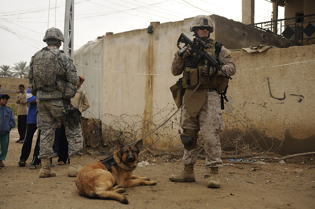 Dog Bite Defense Lawyer California