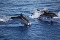 Delfini tra panarea e stromboli 2.jpg