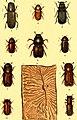 Der Käferfreund. Praktische Unleitung zum Sammeln und Bestimmen der Käfer ((1896)) (20241628113).jpg