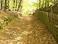 Der Weg zur Hünenburg - panoramio.jpg