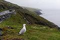 Dingle Bay R559 Dingle Peninsula, Kerry, Ireland.jpg