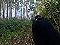 Director and writer Simon Nunn filming for The Grove (2021).jpg