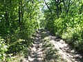 Dirt road in the woods, up the hill - panoramio (1).jpg