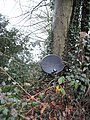 Dish of the Day - geograph.org.uk - 661008.jpg