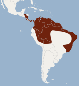 Distribution of Micronycteris minuta.png