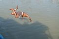 Diving into Ganges - River Hooghly 2013-11-09 4198 Cropped.JPG