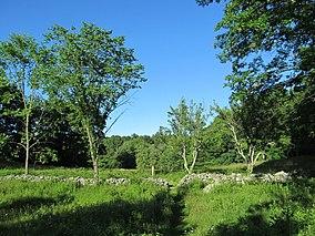 Dolbear Trail, Cormier Woods, Uxbridge MA.jpg