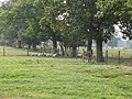 Donkey and sheep in field near Chates Farm - geograph.org.uk - 1502173.jpg
