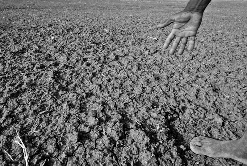 Drought affected area in Karnataka, India, 2012