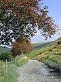 Drover's road at Nant-y-Stalwyn, Cwm Tywi, Powys - geograph.org.uk - 1501506.jpg