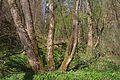 Duben vysenske kopce 22.jpg
