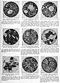 EB1911 Petrology - Plate III.jpg