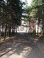 EU-EE-TLN-LAS-Seli-forest.JPG
