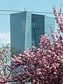 EZB-Gebäude mit Kirschblüten.jpg
