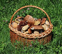 Edible fungi in basket 2019 G1.jpg