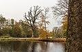 Een in slechte conditie verkerende eik (Quercus) met daarnaast een jonge beuk (Fagus sylvatica). Locatie, Historisch Park Heremastate 01.jpg