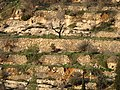 Ein Kerem cultural terraced landscape - photo Ron Havilio.jpg