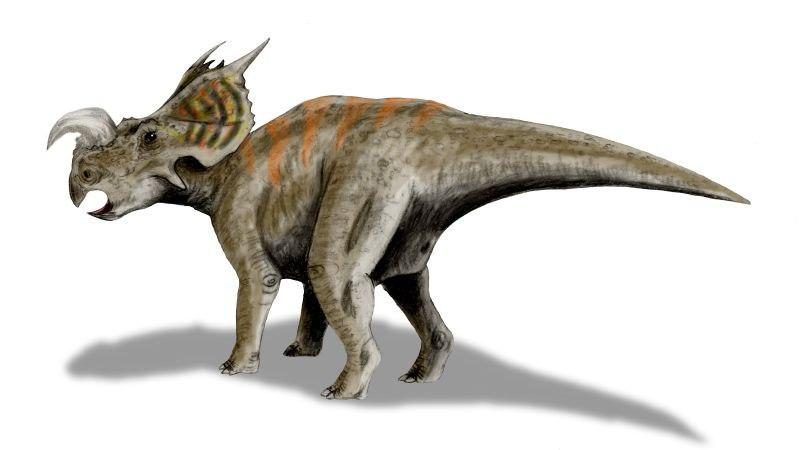 Einiosaurus BW