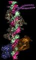 Enhanceosome vertical.png