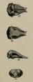 Epoicotherium unicum.png